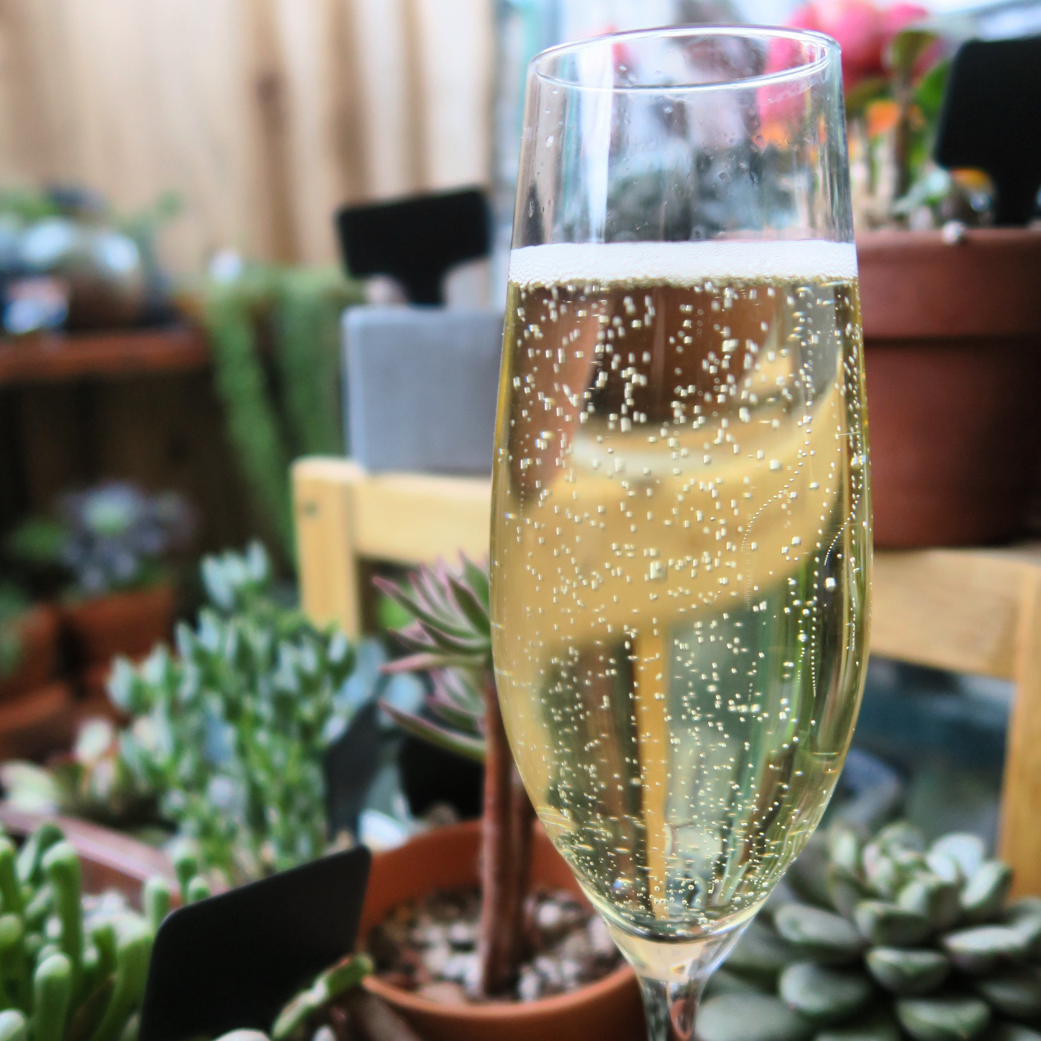 A golden glass of champagne in a garden full of effervescent bubbles.